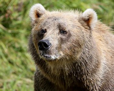 Bear-4930