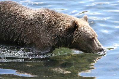 Bear-4859