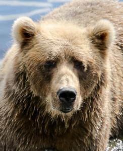 Bear-4639