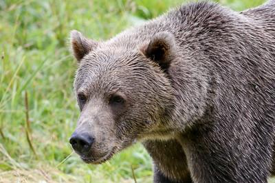 Bear-4815