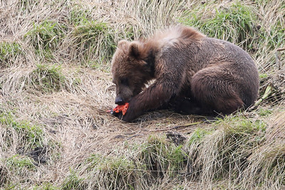 Bear-4808