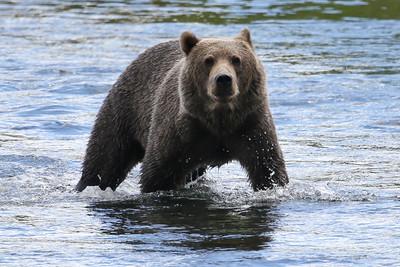 Bear-4525