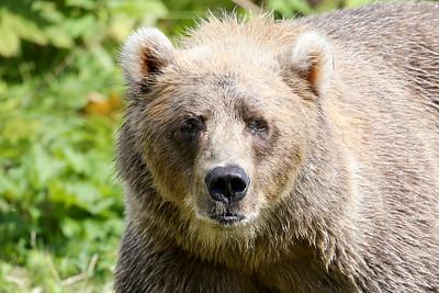 Bear-4908