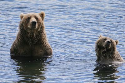Bear-4399