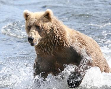 Bear-5123