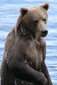 Bear-4832