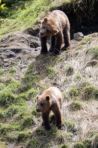 Bear-4587