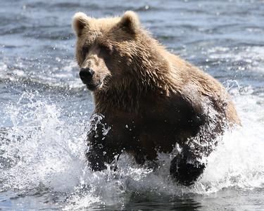 Bear-5119
