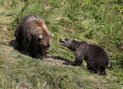 Bear-5202