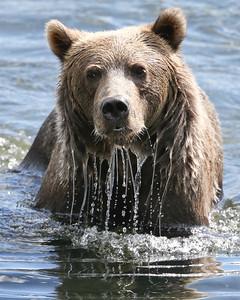 Bear-4855