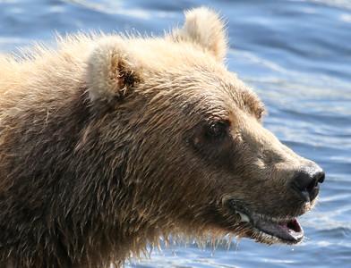 Bear-5134
