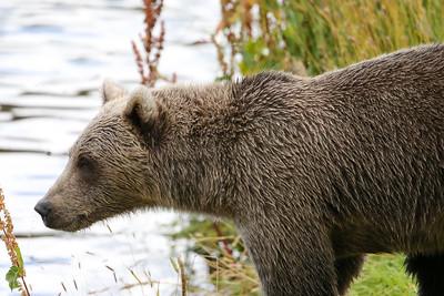 Bear-4821