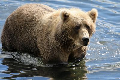 Bear-4635