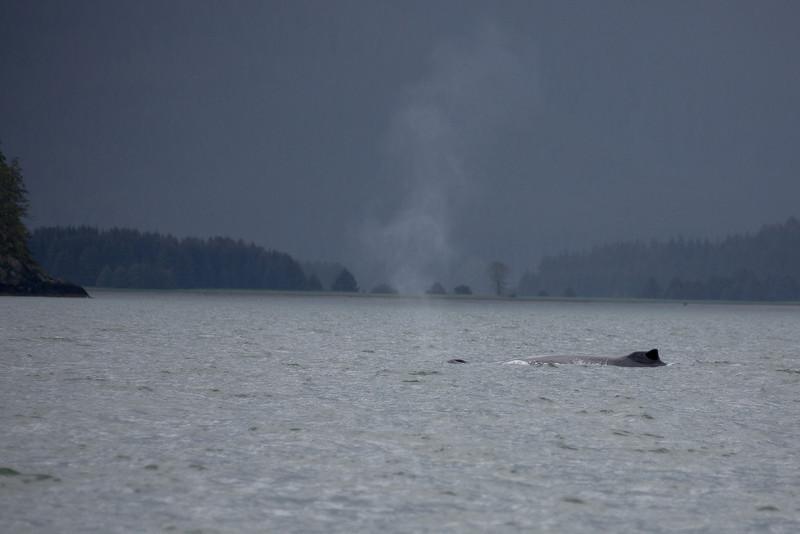 Juneau Alaska Whales
