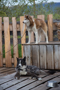 Earth Song Lodge High Camp Kennels