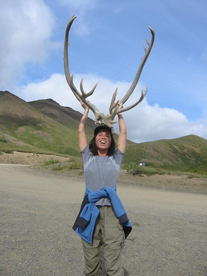 Caribou antlers!
