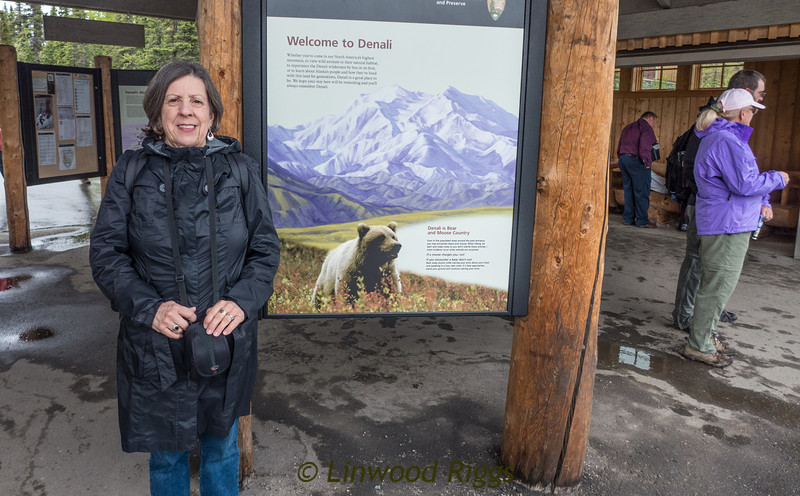 My twin sister, Norma, accompanied me on my trip to Alaska in June, 2013.  After a Holland America cruise from Vancouver to Seward, AK, we took a motorcoach to Holland's hotel just outside Denali National Park, where we stayed three nights.  We took two long bus rides into the park - one was 7 hours and the other was 11 hours - and saw lots of wildlife.  Tiring?  Yes, very, but it's the only way to see the park. and the scenery and wildlife mode it all worthwhile.