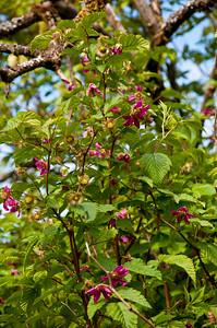 Bush with pretty purple flowers.