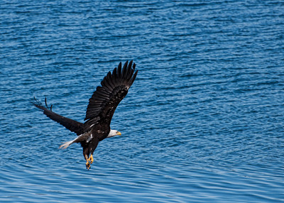 This area is a perfect spot to see eagles and whales.