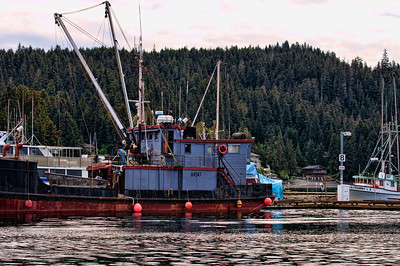 The harbor is full of fishing boats that were so colorful against the Alaskan forest.
