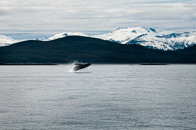 A whale breeches before a backdrop of beautiful mountains.