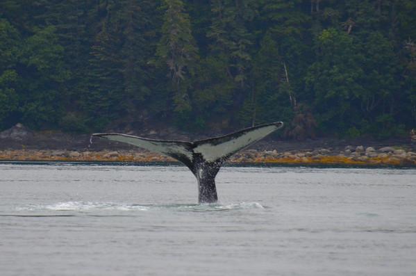 Juneau, Whales,Eagles & Glaciers