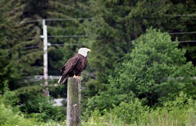 Eagles too
