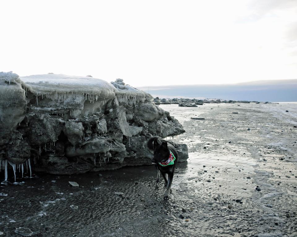 Ice on Kenai Beach - Kenai - Kenai Peninsula - Alaska - USA