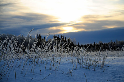 Hoarfrost on Grass - Sunset - Kenai - Kenai Peninsula - Alaska - USA