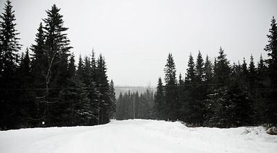 Snowy Day - Cooper Landing - Kenai Peninsula - Alaska - USA
