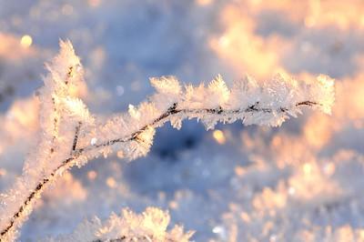 Hoarfrost - Alaska Winters - Anchorage - Alaska - USA
