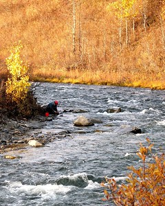 Autumn Colors - Cache Creek - Goldpanner - Petersville Area - Alaska - USA