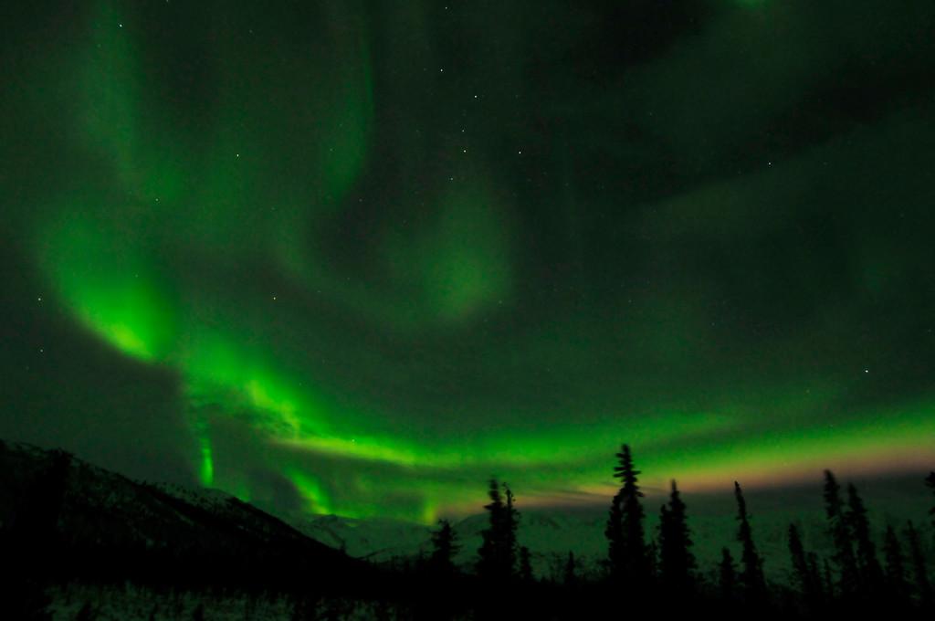 Northern Lights/ Aurora - Cantwell - Alaska - USA