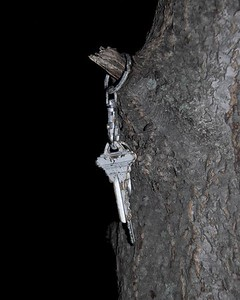 Keys on a tree - Anchorage - Alaska