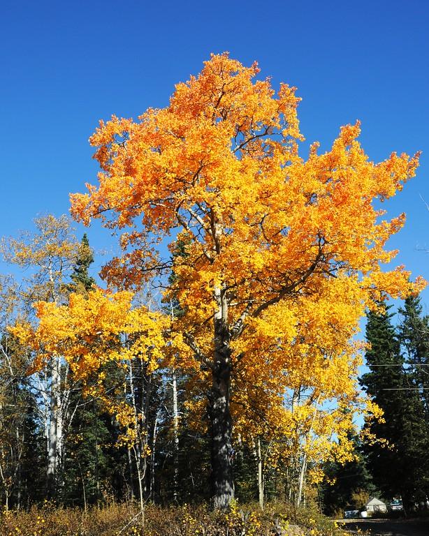 Fall Colors - Edgerton Highway - Alaska - USA