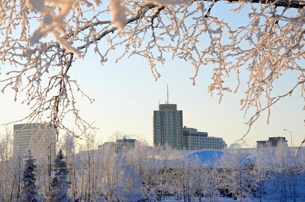 Hilton Hotel - Downtown - Hoarfrost - Alaska Winter - Anchorage - Alaska - USA