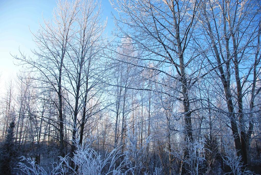 Hoarfrost - Anchorage - Alaska - USA