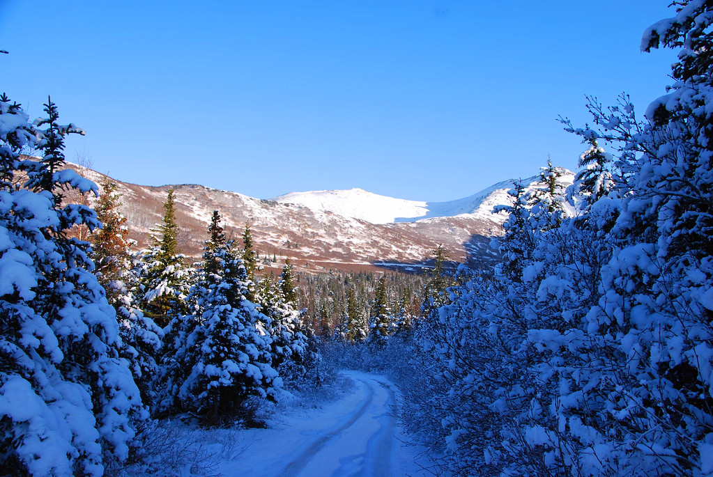 Snowy Lane - Anchorage - Alaska
