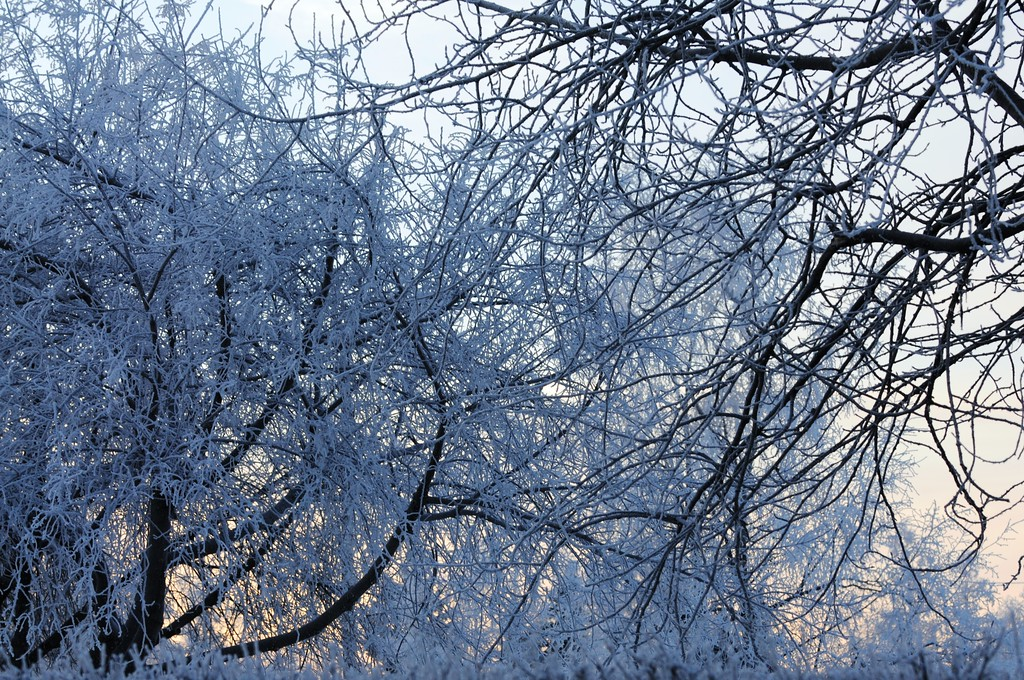 Hoarfrost - Alaska Winters - Anchorage - Alaska - USA