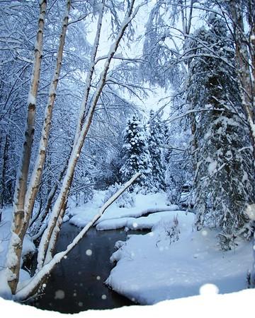 Campbell Creek - Anchorage - Alaska