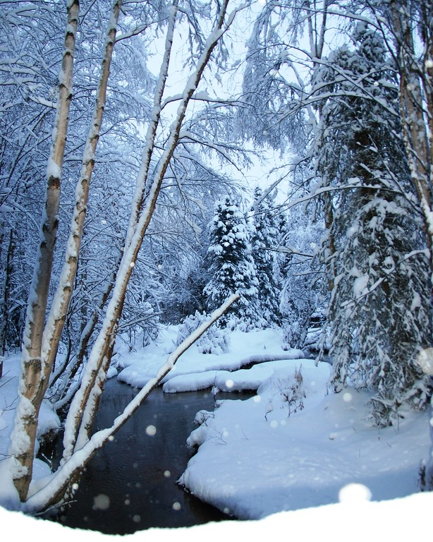 Campbell Creek - Anchorage - Alaska
