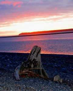Sunset - Pink - Stump - Anchorage - Alaska  - USA