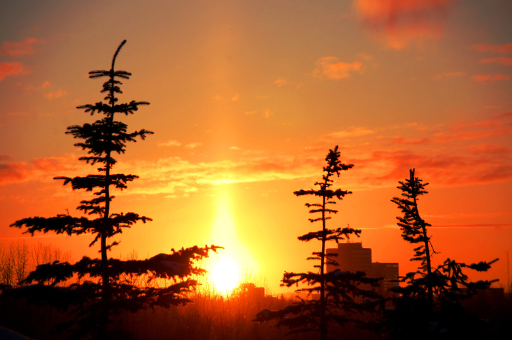 Sunset - Golden - Spruce Trees - Anchorage - Alaska  - USA