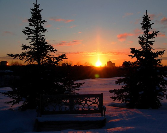 Sunset - Golden - Spruce Trees - Park Bench - Winter - Anchorage - Alaska  - USA