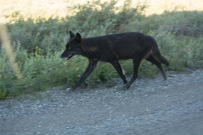 Thursday July 20th - Denali National Park-92-2