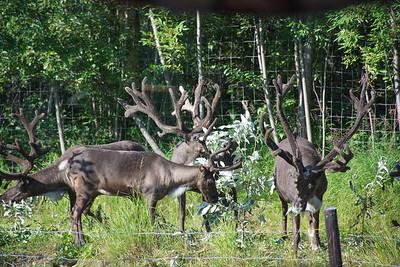 Tuesday July 18 - Fairbanks-24