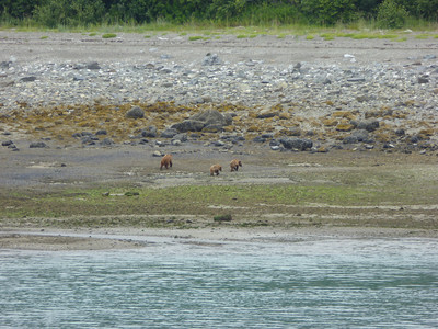 Tuesday July 25th - Glacier Bay National Park-17