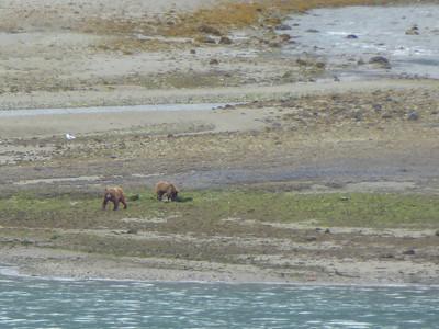 Tuesday July 25th - Glacier Bay National Park-8