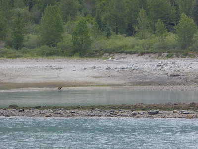 Tuesday July 25th - Glacier Bay National Park-21