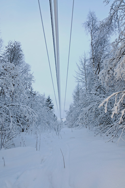 Snowy Power Lines - Scenic Alaska - Winter - Alaska - USA
